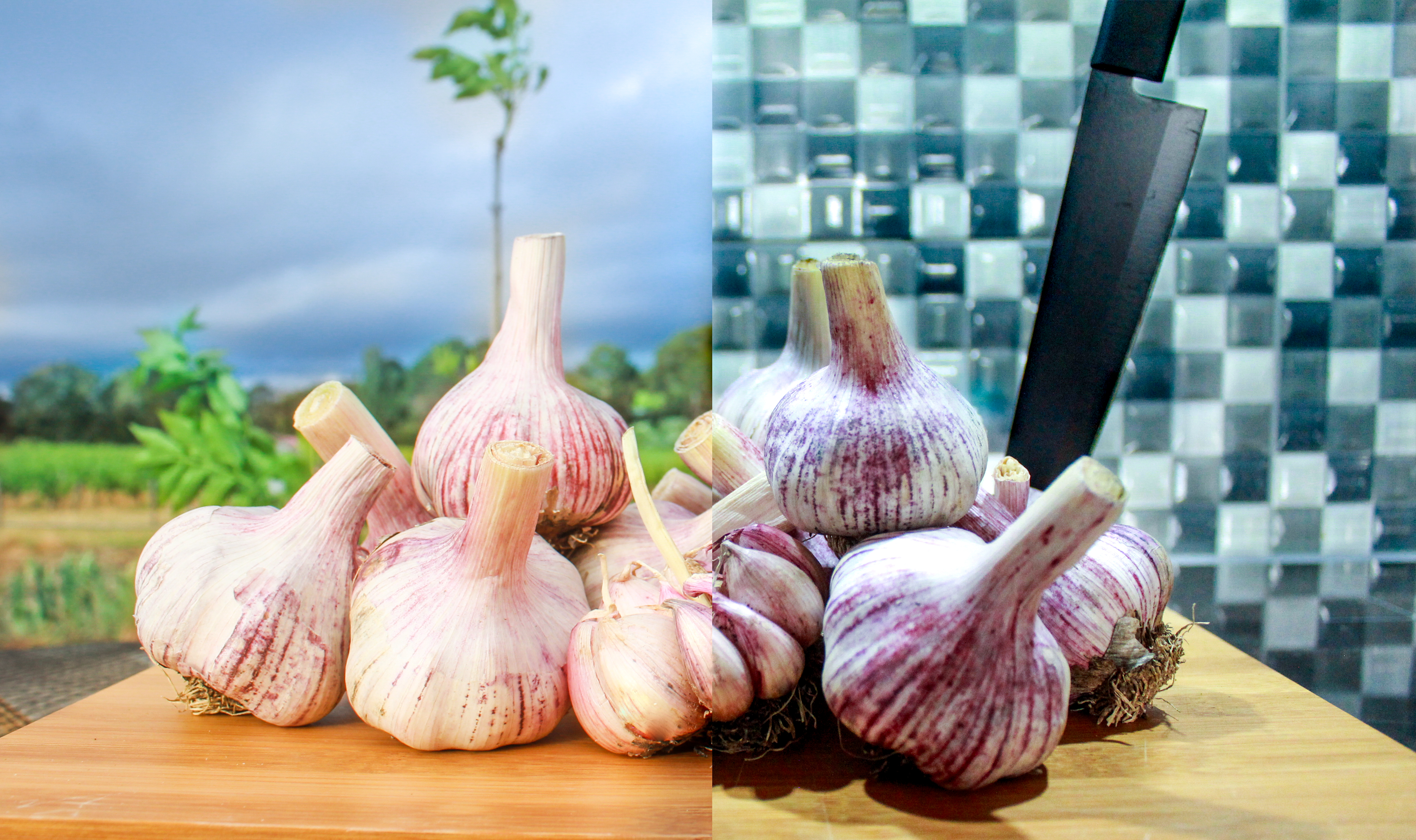 Purple garlic from the farm to the kitchen.