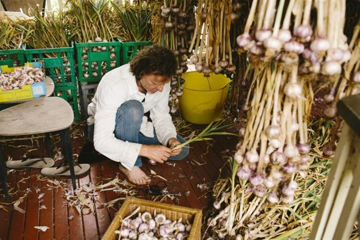 Grahame sorting the garlic