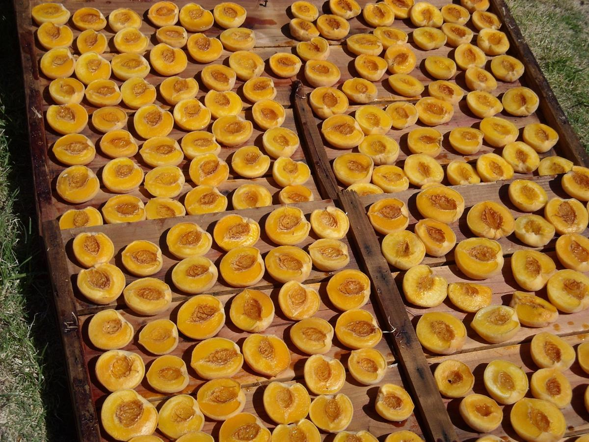 Peaches drying