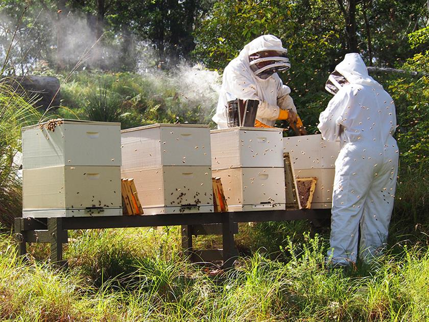 Two Busy Bees Honey team working in the Apiary